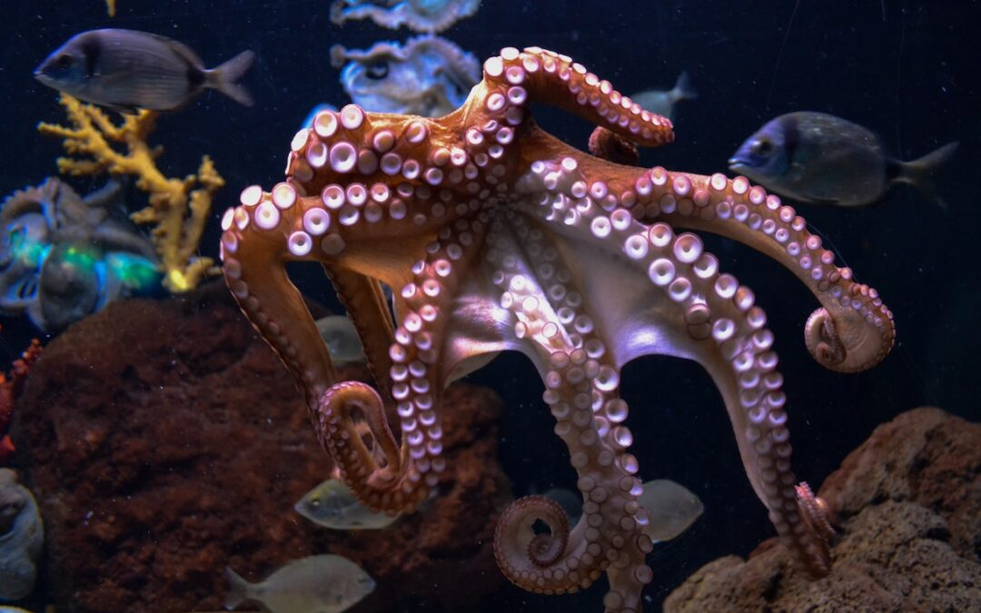 Have you seen My Octopus Teacher yet?